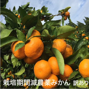 A23-191 減農薬みかん 700g6パック【訳あり】傷あり 3S