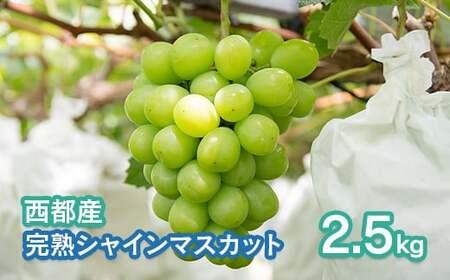 【先行予約/数量限定】シャインマスカット約2.5kg 西都産完熟ぶどう<1.7-8>