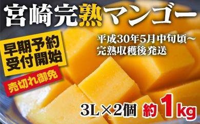 1-23 酒井農園 西都産宮崎マンゴー大玉3Lサイズ2個