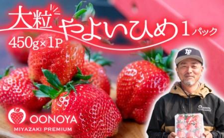 苺 大野屋 厳選大粒いちご やよいひめ 1P【個数限定】<1-37>