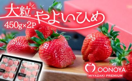 苺 大野屋 厳選大粒いちご やよいひめ ダブル2P【個数限定】<2-27>