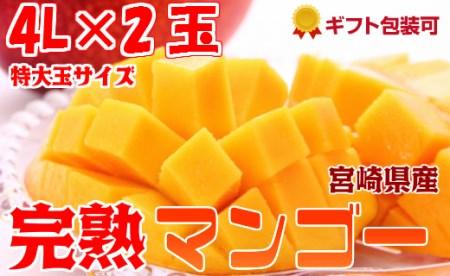 2020年4月中旬から順次出荷<特大 4Lサイズ>宮崎県産 完熟マンゴー 2玉 化粧箱入り【C-78-02】