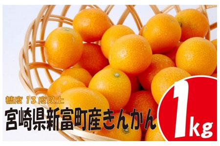 <早期予約受付>宮崎県産 大木農園の完熟きんかん1kg※平成31年1月中旬頃から順次出荷【B176-01】