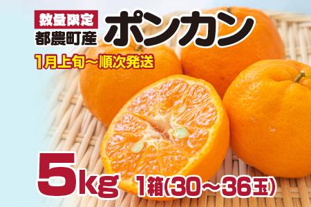 A429 ポンカン計5kg(30~36玉)都農町産