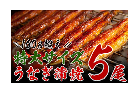 B15-d 【5月配送分】★迫力満点★うなぎ蒲焼(長焼5尾入)