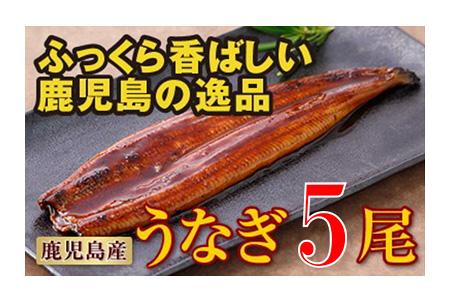 7802 鹿児島産特上うなぎ5尾!