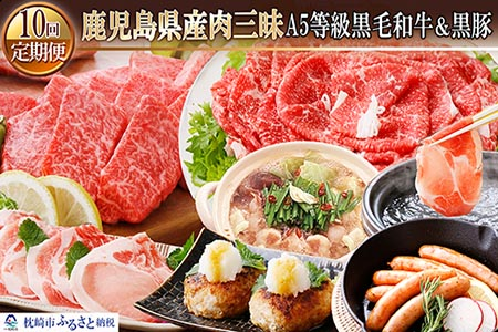 GG-0028 定期便(1年で10回配送)鹿児島県産肉三昧(A5黒毛和牛・黒豚etc)