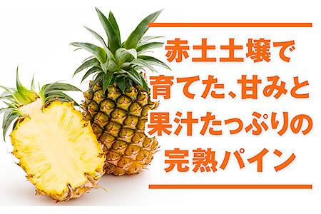 A5-2294/世界的に多く生産されるパイナップルの代表『ハワイ種』国産パイン5玉(約4kg)【限定500セット】