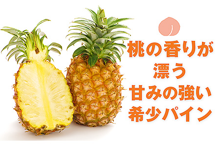 A5-2296/桃の香り漂う希少パイン!国産ピーチパイン5玉(約3kg)【限定500セット】