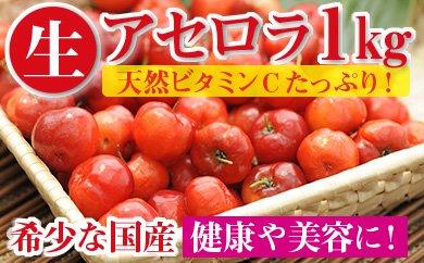 A5-22108/希少な国産アセロラの生果実250g×4P!天然ビタミンCたっぷりのスーパーフルーツ!