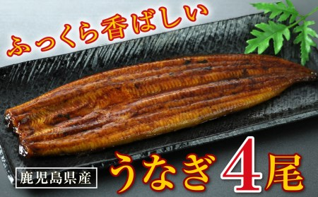 B2-2202/鹿児島県大隅産 特上うなぎ155g×4尾!