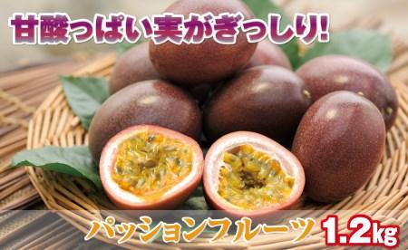 A1-22108/甘酸っぱい!プチプチ食感!パッションフルーツ