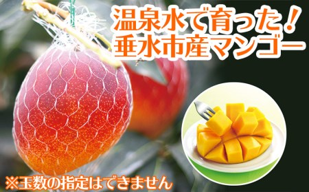 A1-22114/天然温泉水【財宝】で栽培!超旨!完熟マンゴー
