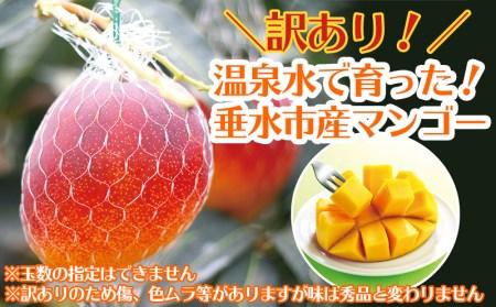 A1-22115/天然温泉水【財宝】で栽培!訳あり完熟マンゴー