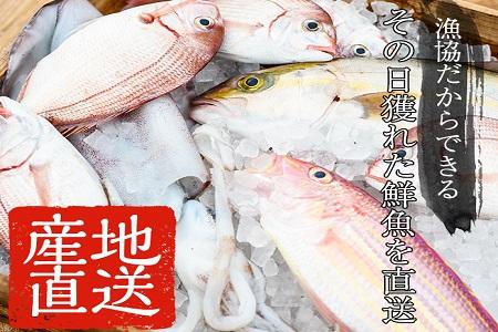 A-052 海の幸鮮魚コース