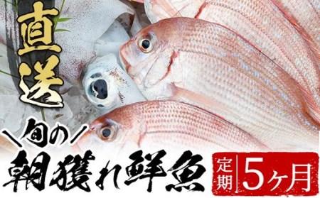 E-006 海の幸鮮魚コース 5か月発送