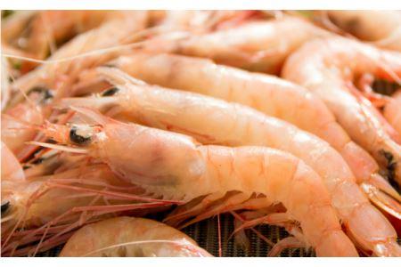 □【希少】鹿児島県産 特撰 天然たかえび(生食用) 1.4kg