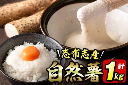 a3-111 大地の宝!志布志産自然薯 1kg以上(1~2本入り)