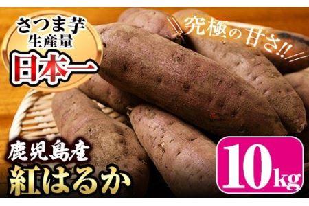 No.184 鹿児島県産紅はるか10kg(生芋)鹿児島県産サツマイモべにはるかを独自の貯蔵庫で熟成させ甘さ溢れる蜜芋に仕上げたさつまいも【甘いも販売所】