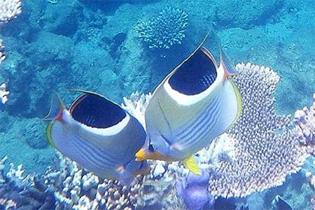カラフルな熱帯魚達と一緒にシュノーケリングツアー(3時間コース)