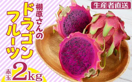 【生産者直送】棚原さんのドラゴンフルーツ(赤玉)2kg