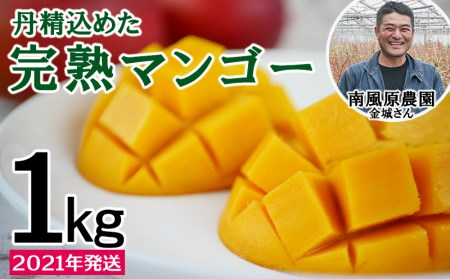 【2020年発送】<南風原農園>丹精込めた「完熟マンゴー」1kg