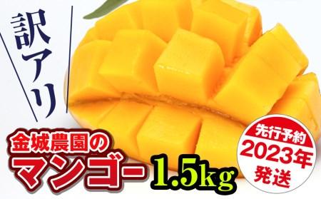 【訳あり】2022年発送 金城農園のマンゴー1.5kg