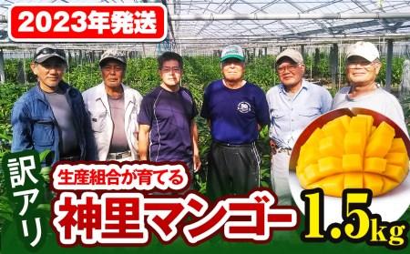 【訳あり】2022年発送 生産組合から直送!神里マンゴー1.5kg