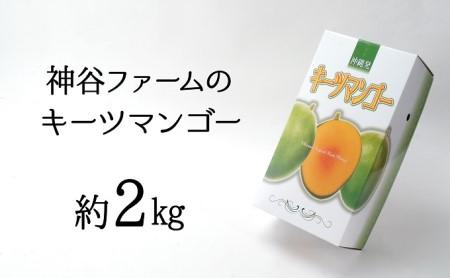 神谷ファームのキーツマンゴー 約2kg(2~3玉)