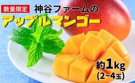 神谷ファームのアップルマンゴー約1kg(2~4玉)