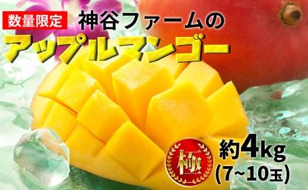 神谷ファームのアップルマンゴー(極)約4kg(7~10玉)