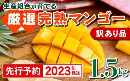 【2022年発送・訳あり品】生産組合が育てる厳選・完熟マンゴー約1.5kg