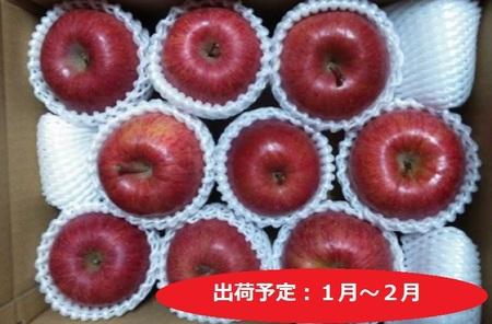 年明け ふみ丸ファーム 訳ありサンふじ3kg【弘前市産・青森りんご】