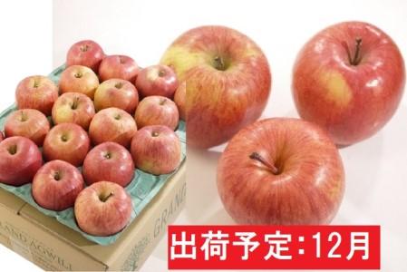 12月 美味!家庭用葉とらずサンふじ約5kg【弘前市産・青森りんご】