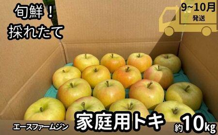 9~10月【訳あり】旬鮮・採れたてりんご!トキ10kg【弘前市産・青森りんご】