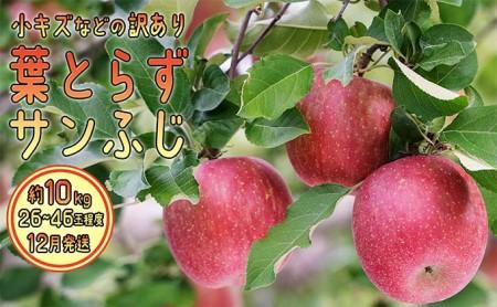 12月 訳あり 美味 葉とらずサンふじ約10kg【青森りんご・グランド アップル・12月】