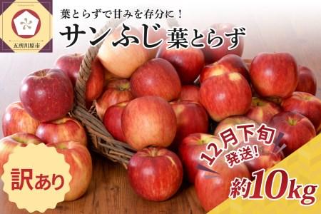 ※2021年12月下旬発送※ 【訳あり】 りんご 約10kg サンふじ 葉とらず 青森産