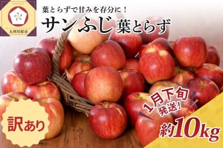 ※2022年1月下旬発送※ 【訳あり】 りんご 約10kg サンふじ 葉とらず 青森産