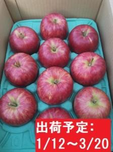 年明け 山の完熟サンふじ約3kg  津軽広船産