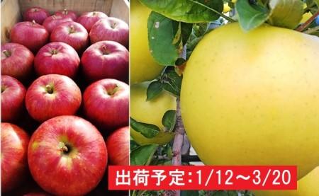 年明け 吹田りんご園  山の完熟サンふじ・シナノゴールド合計約3kg(詰合せ)津軽広船産