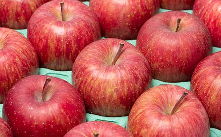 年明け 蜜入り 糖度保証サンふじ 約5kg 【JA津軽みらい・平川市産・青森りんご・1月】