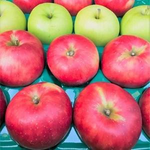 【青森県】ももやの「りんご」約5kg (16~20玉)【1024127】