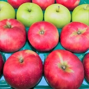 【青森県】ももやの「りんご」約10kg (32~40玉)【1024128】