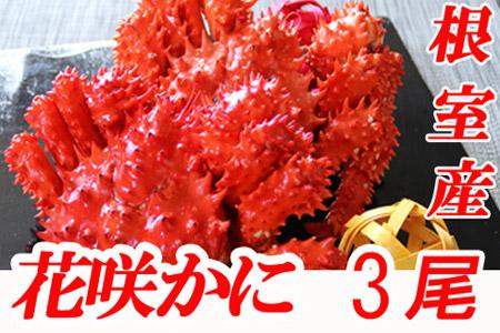 【北海道根室産】花咲かに500~650g前後×3尾 B-70002