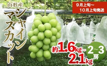 FS20-045 大粒シャインマスカット 秀品 2房~3房入り(約1.6kg~2.1kg)