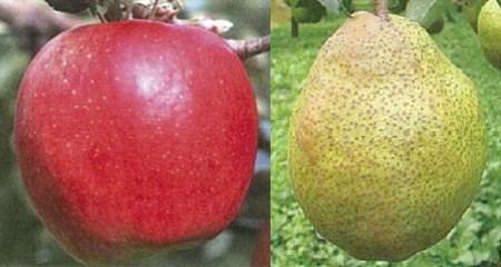 A07-30 りんごとラ・フランス3kg