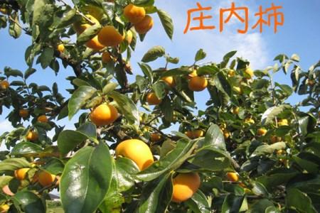 【B-206】庄内柿(入金期限:H30.10.31)