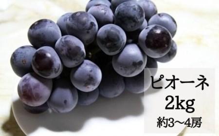 No.0488 ぶどう ピオーネ2kg