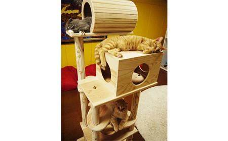 [№5771-1048]木のキャットタワー「猫まみれツリーハウス」