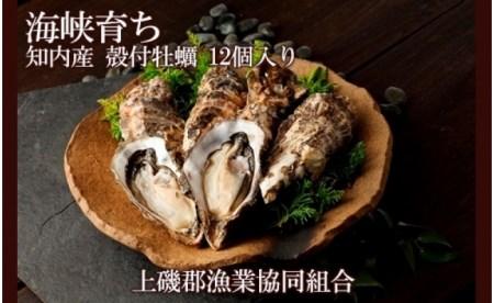 2021年発送予約開始! 海峡育ち「知内産 殻付牡蠣 12個入り」【上磯郡漁業協同組合】【DD023】
